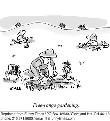Funny garden tomato plant cartoon, August 31, 2011