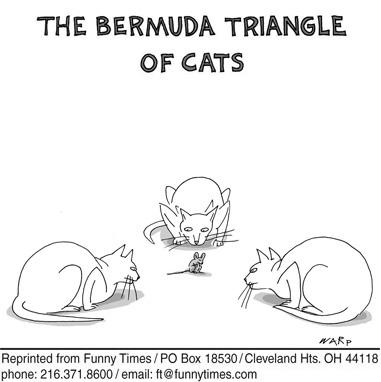 Funny cat cats warp  cartoon, January 18, 2012