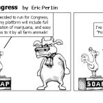 Chicken Run For Congress