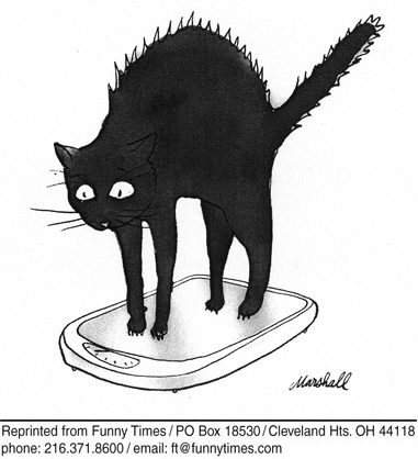 Funny cats weight scale  cartoon, July 11, 2012
